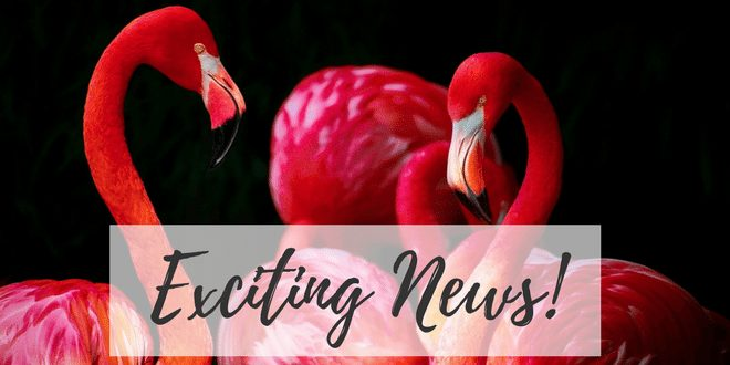 Exciting News about Flamingo Paperie