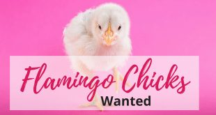 Join Flamingo Paperie Business